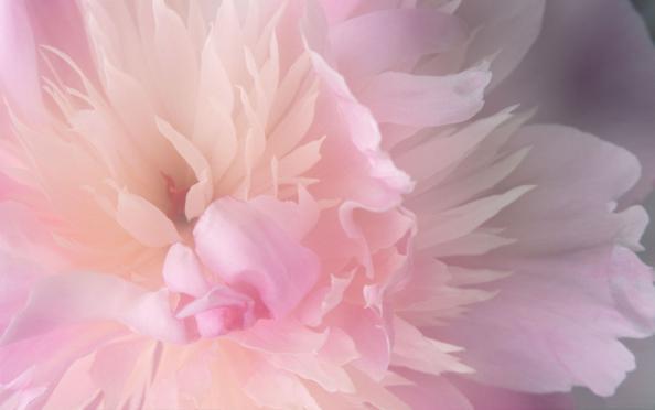 Image result for фото везде любовь