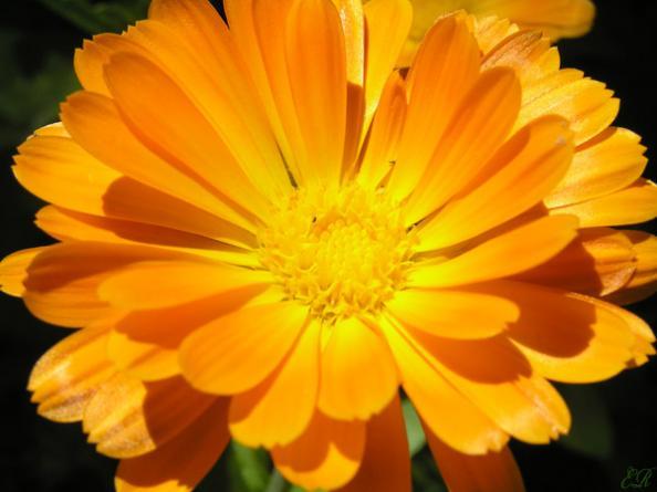 Растение его свойства и целебная сила