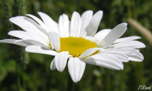 Комнатные цветы комнатный цветок