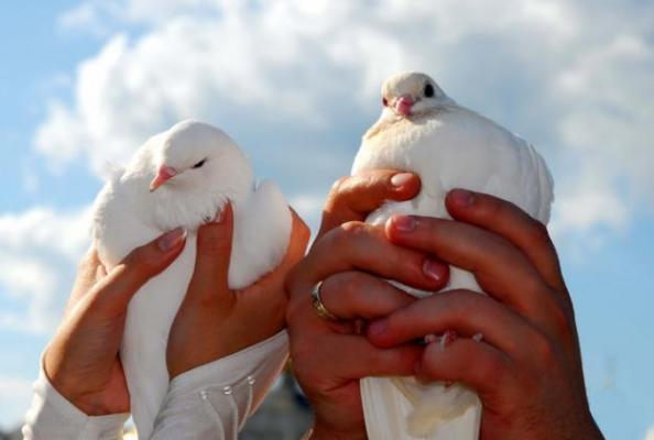 Сонник раненый голубь к чему снится раненый голубь во сне