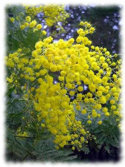 ...в которых можно будет торговать цветами в... Где в Смоленске будут торговать мимозами и...